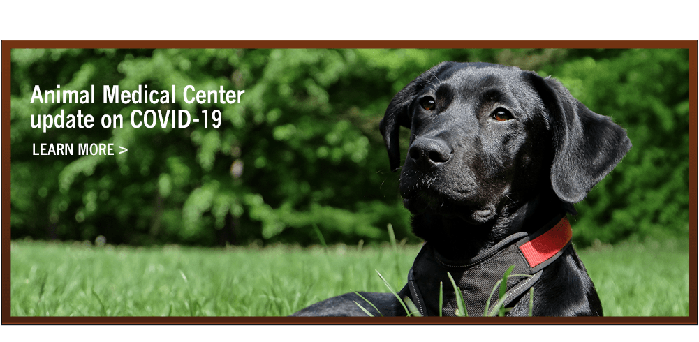 Animal Medical Center update on COVID-19. Learn More.